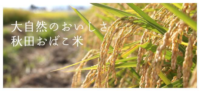 大自然のおいしさ 秋田おばこ米