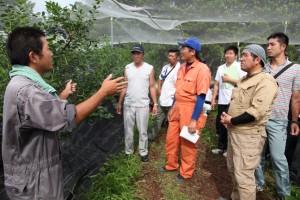 エコニコ農園ではブルーベリーの栽培管理などを学びました