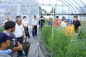 部会員ほ場で半促成栽培を学ぶ参加者