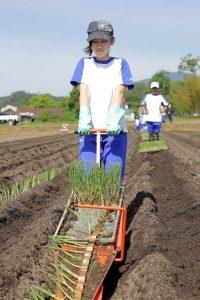 写真=簡易移植機を引っ張りネギの苗を定植する児童